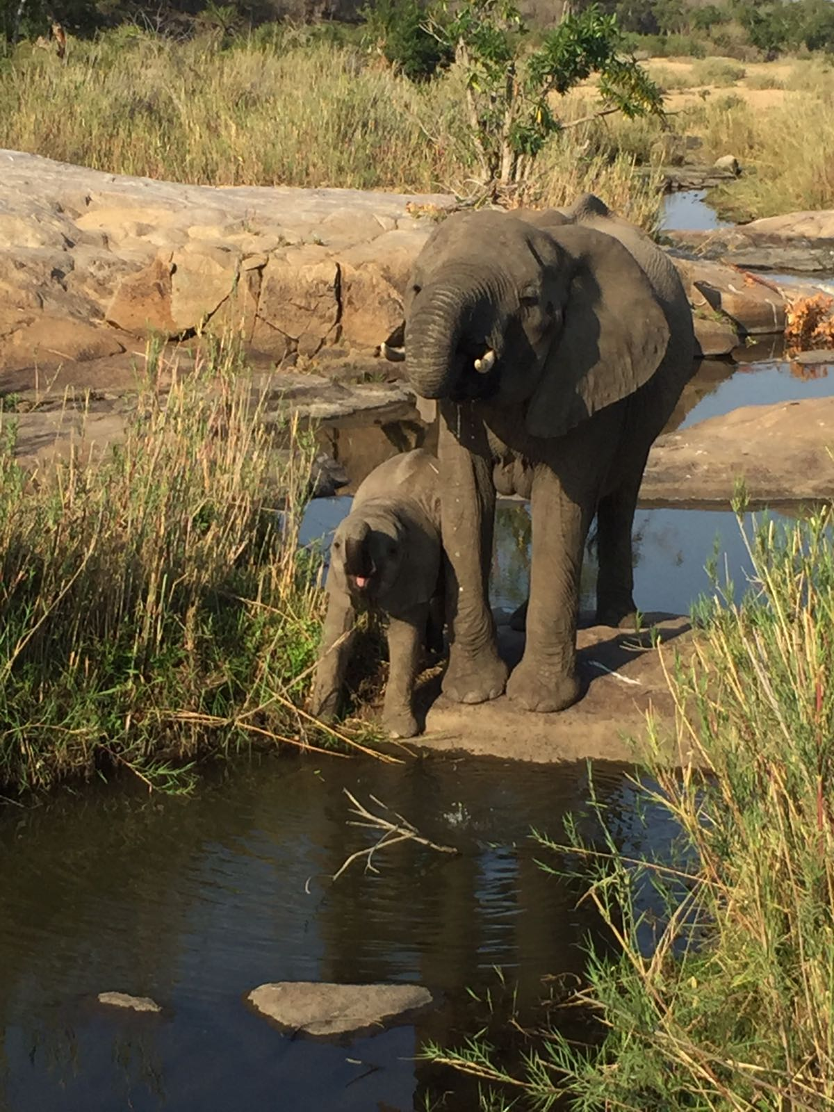 elephants-watering-hole